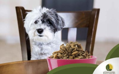 Why Consider Buying Organic Food For Pets